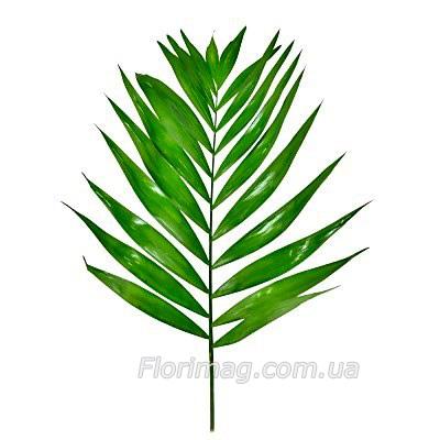 зелень чико фото