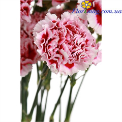 харьков купить цветы