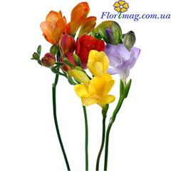 Цветы оптом купить прайс украине — img 3