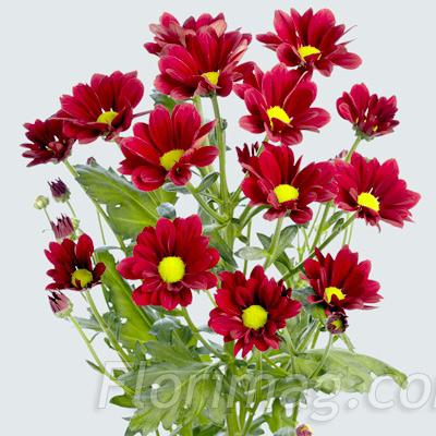 Где купить цветы на срез подарок на 8 марта в самаре