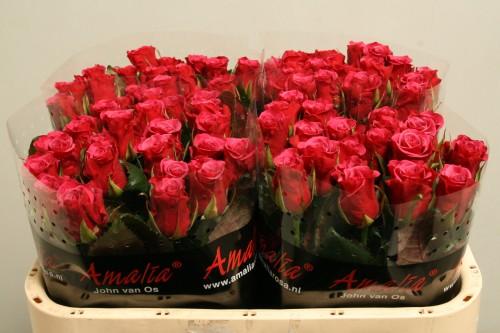 Доставка цветов в биробиджане недорого с