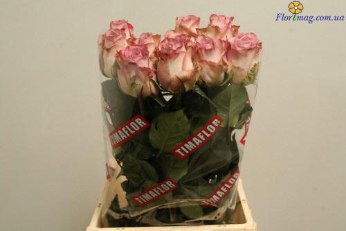 Цветов рубцовск цветы купить цены оптом днепр корзины цветами
