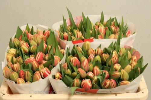 Закупки цветов цветы тюльпан оптом днепропетровске