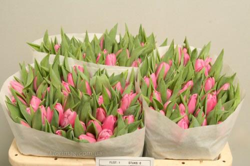 Цветы тюльпан оптом днепропетровске стоит