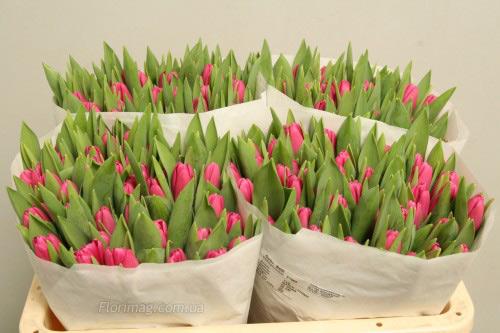Желтые цветы оптом харьков тюльпаны оптом