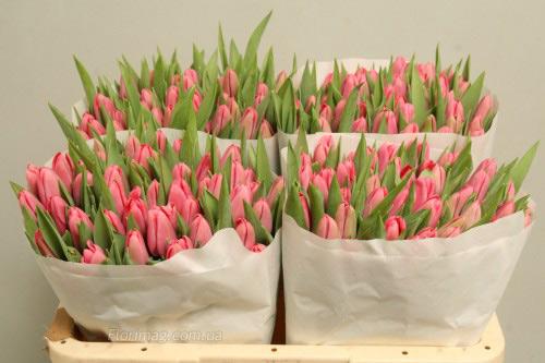 Цветы оптом харьков тюльпаны 2