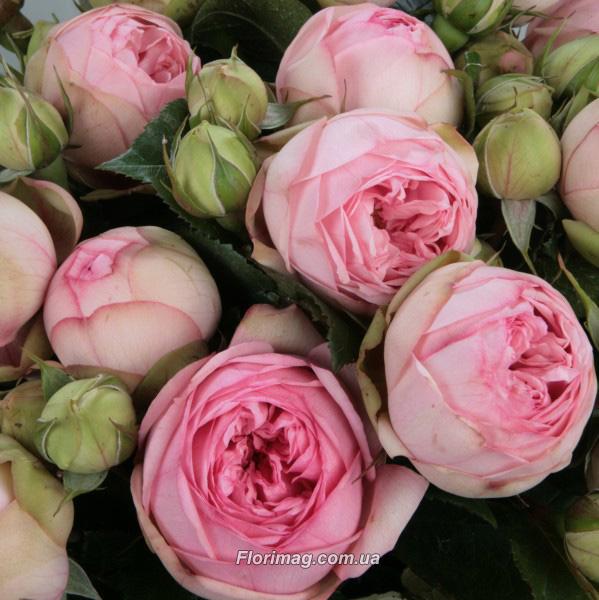Цветы купить оптом в курске