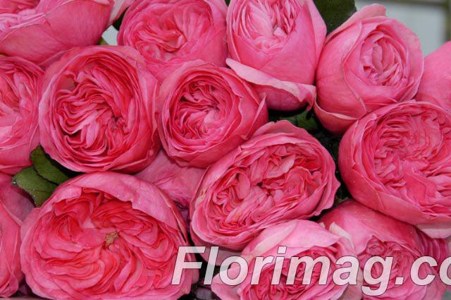Новый год заказать цветы из голландии оптом цены букеты